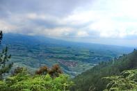 pematang landscape