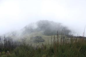 Sabana dari puncak